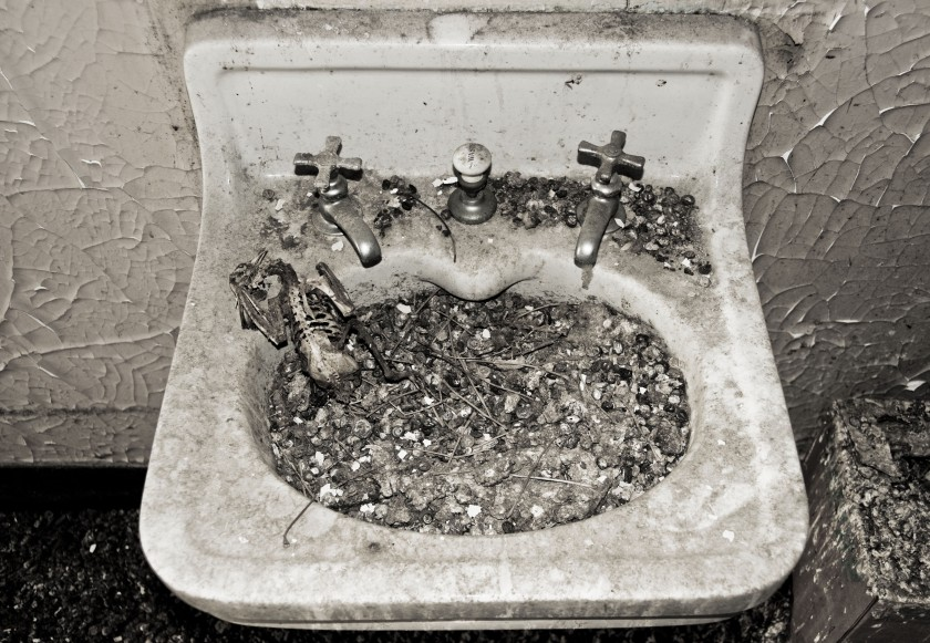defication bird bath-kristen-memmolo-artist-ny