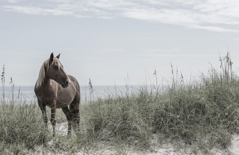 Blonde Wild Horse