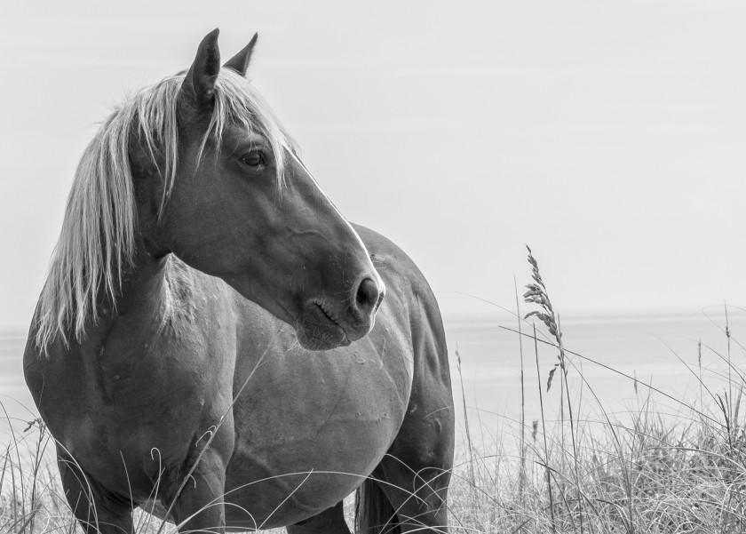 Blonde Horse